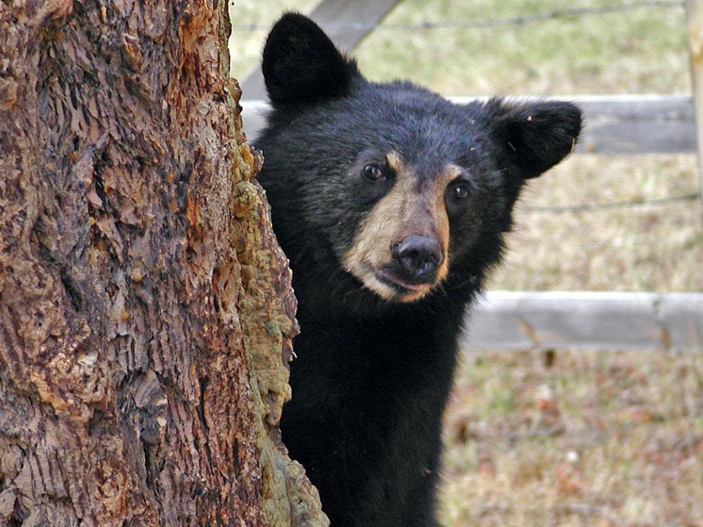 A Bear Market A Bear Market I...
