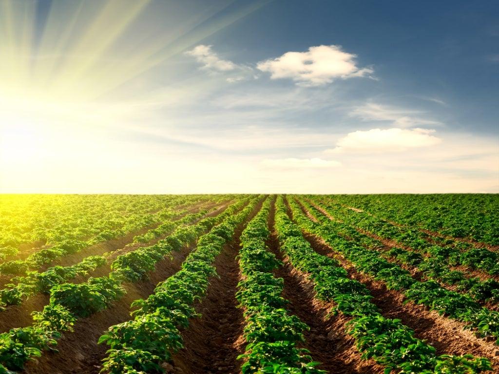 S&W Seed Company (NASDAQ:SANW) - Stevia /Agriculture Stocks Alert   Benzinga