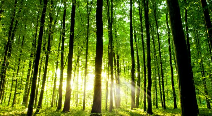 Action in Timber May Signal Start of Recovery
