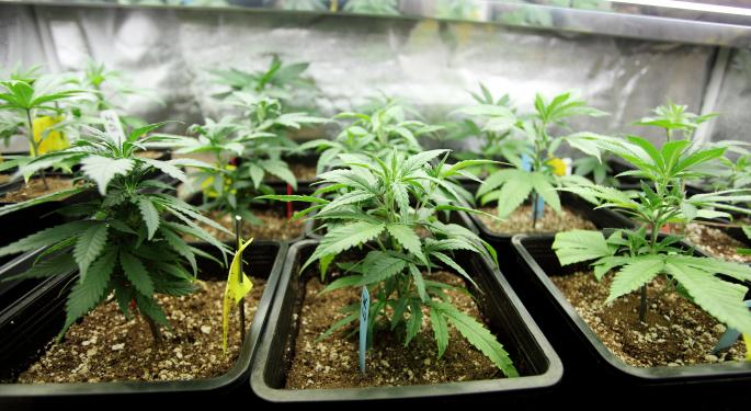 Growing Marijuana Strategically, With BreedIT CEO Dr. Oded Sagee