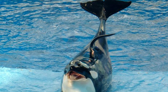 Citigroup Upgrades SeaWorld To Buy Citing Favorable Valuation Following Share Price Collapse